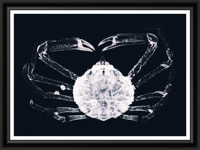 Tablou 2 Piese Framed Art X Ray Ocean Species