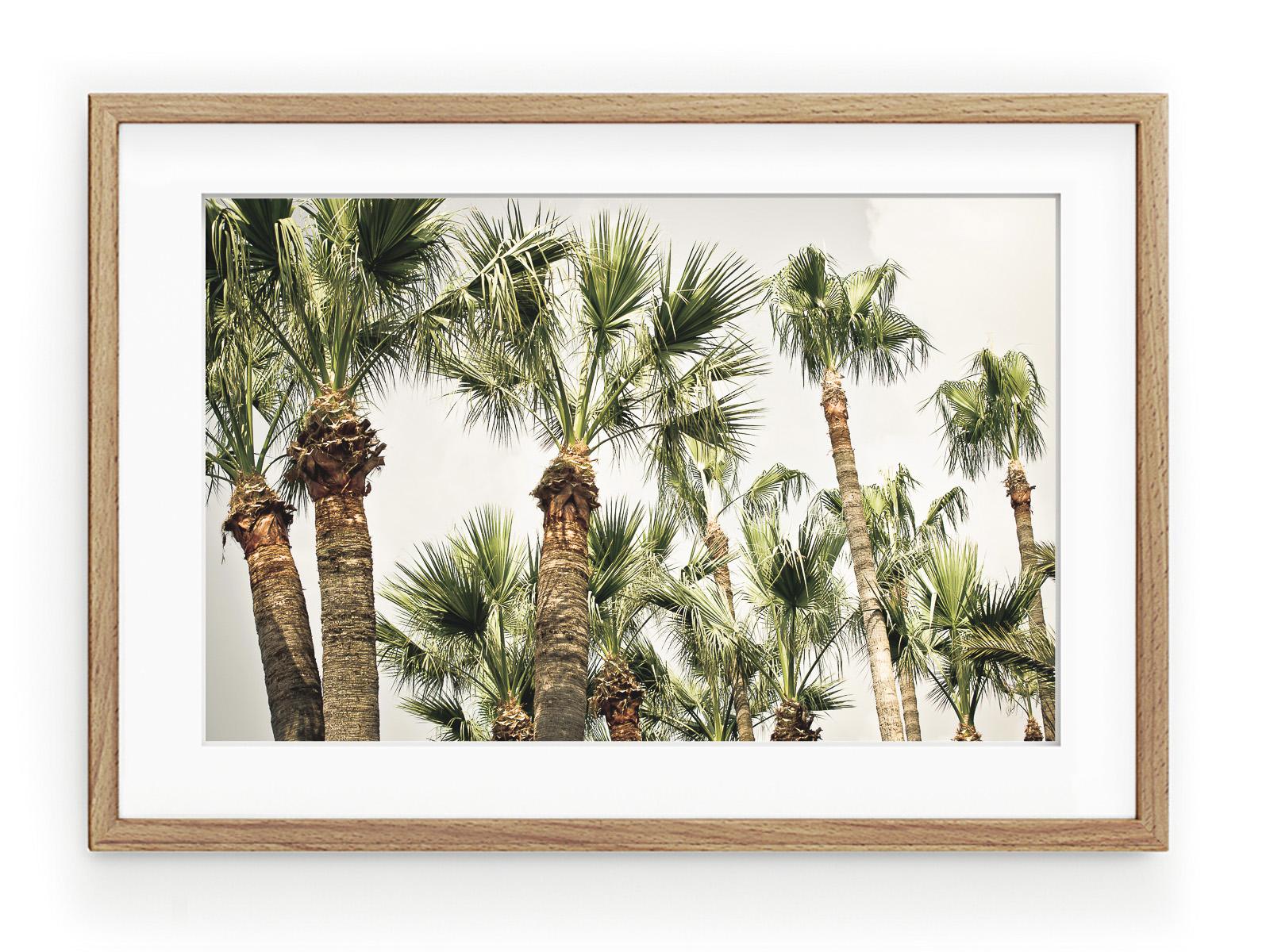 Tablou Palmiers II Oak