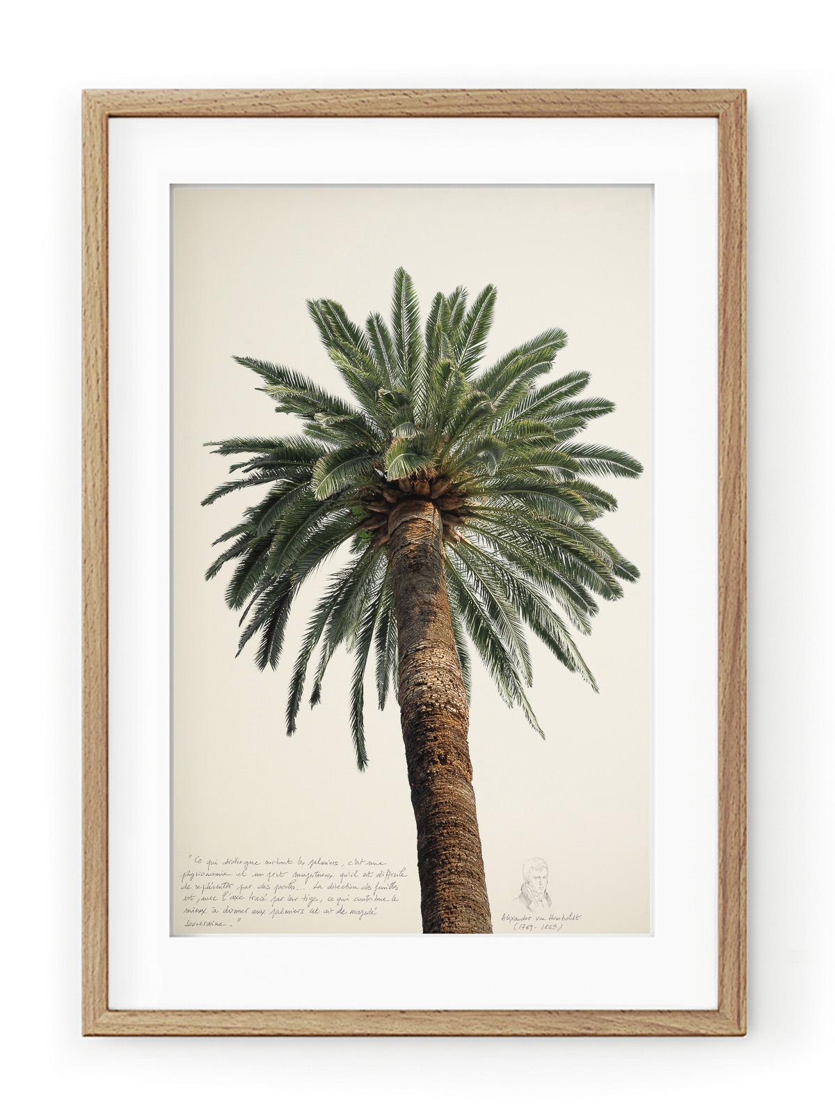 Tablou Grands Palmiers II Oak