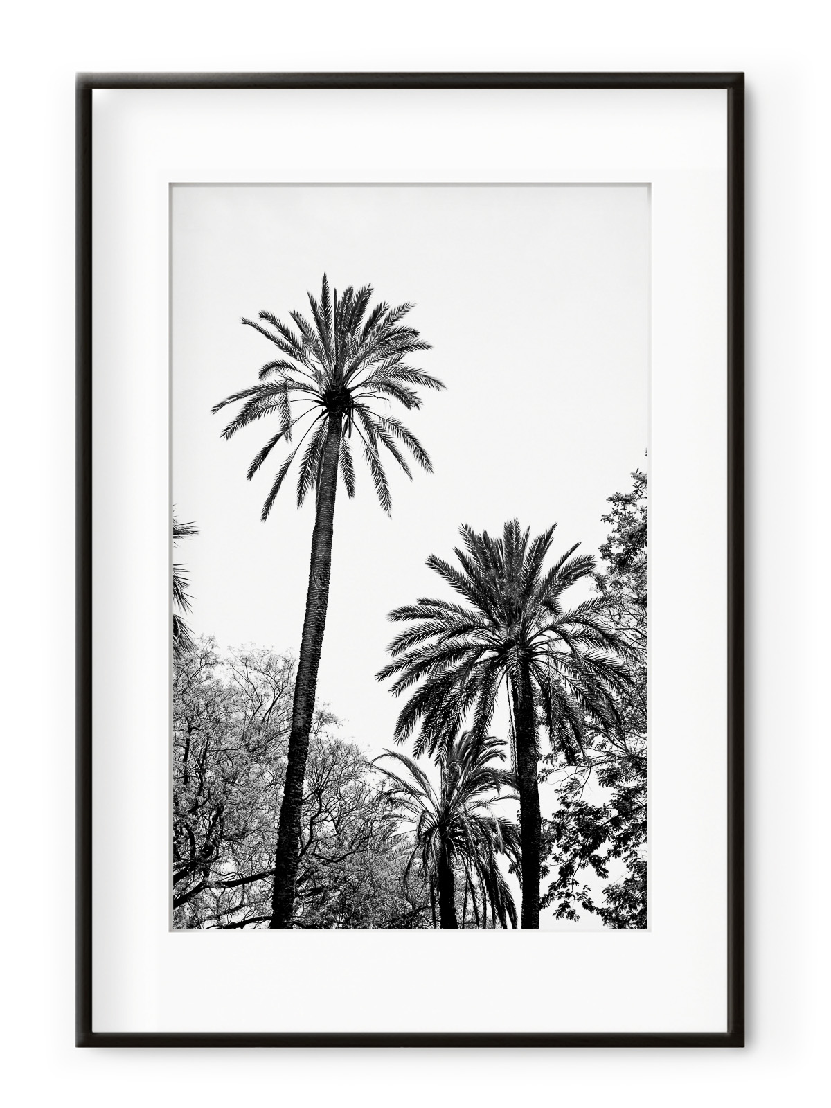 Tablou Grands Palmiers Aluminium Noir