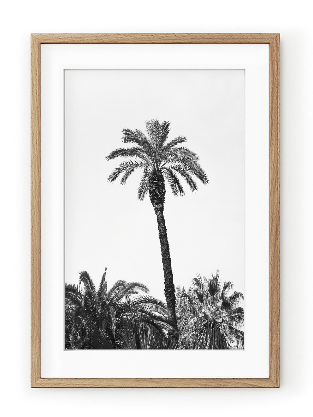 Tablou Grands Palmiers III Oak