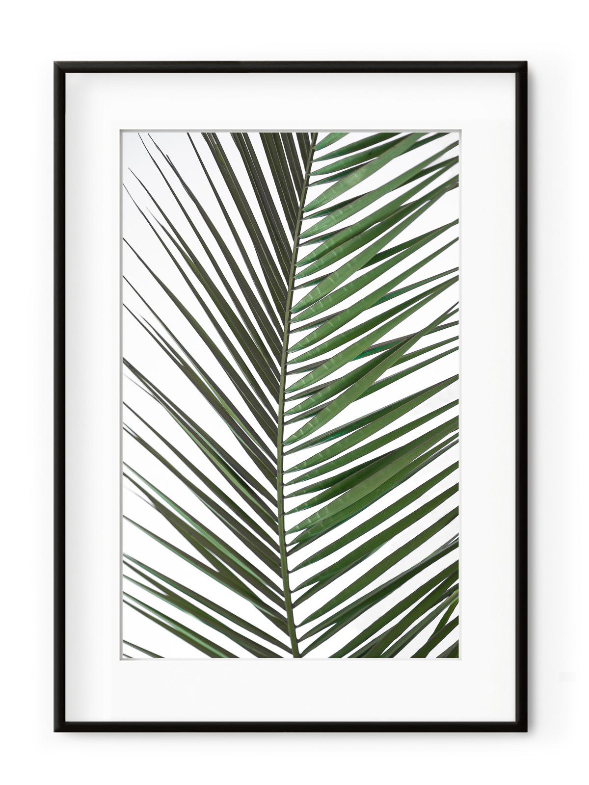 Tablou Palm Leaf Aluminium Noir