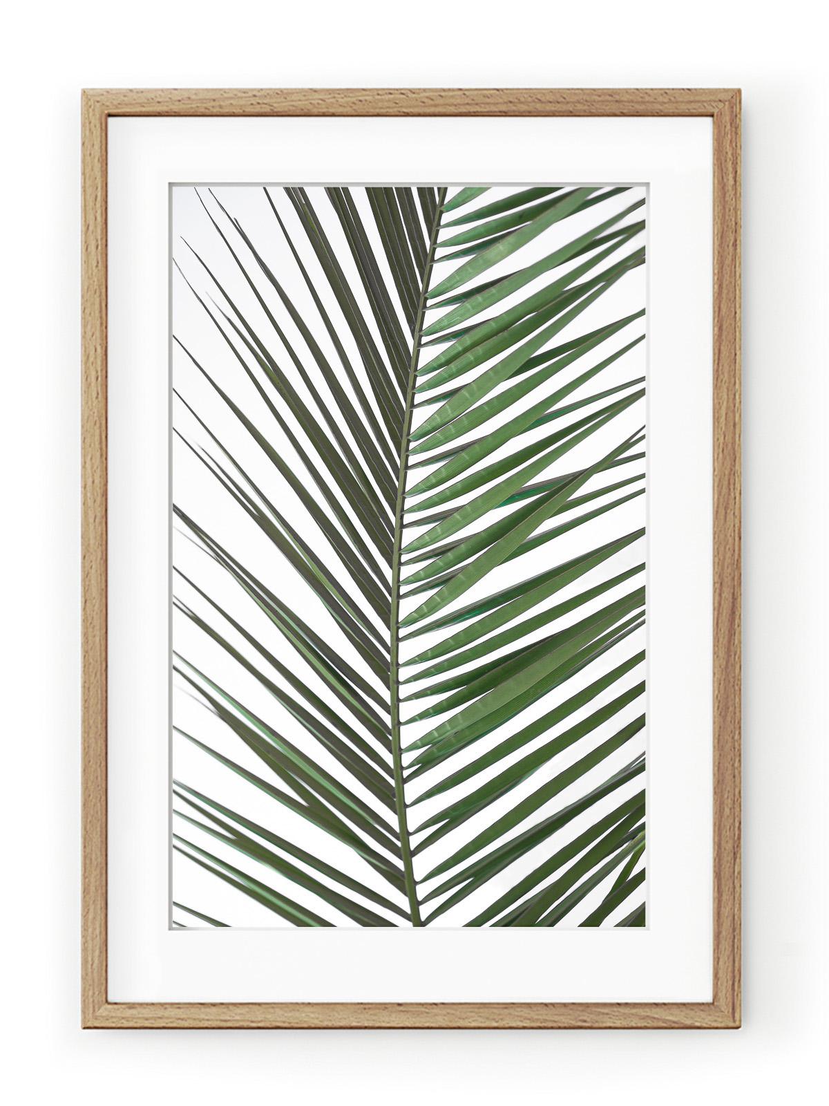 Tablou Palm Leaf Oak