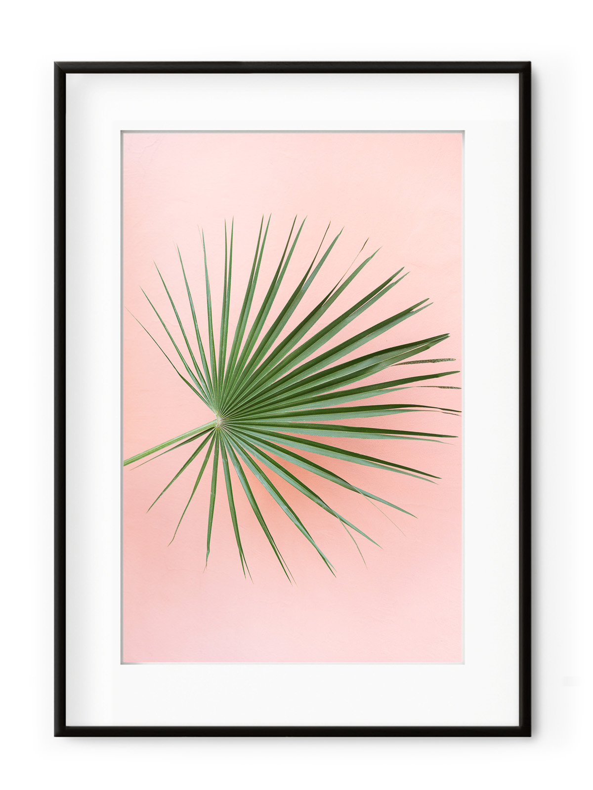 Tablou Palm on Pink Aluminium Noir