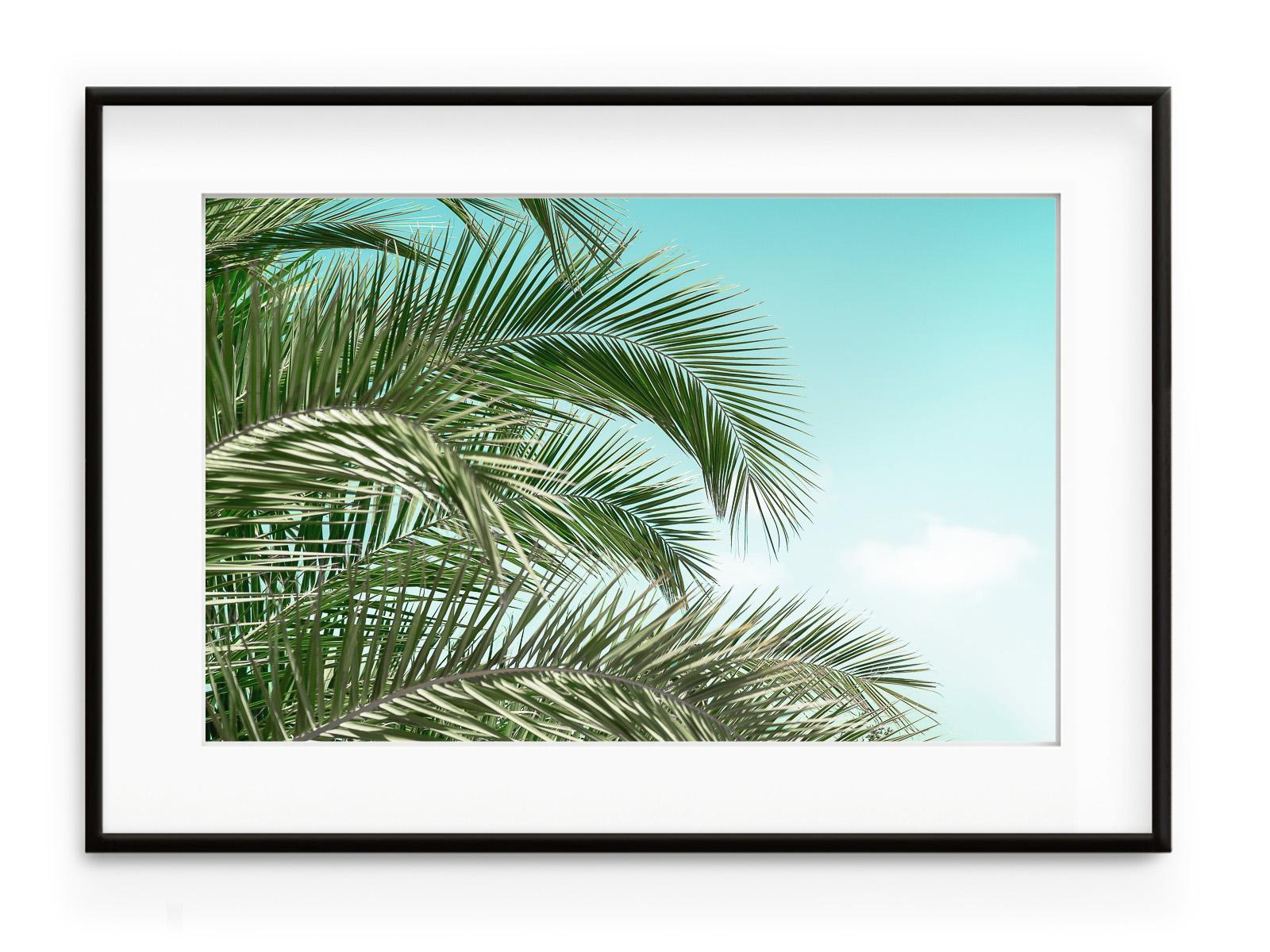 Tablou Palms & Sky Aluminium Noir