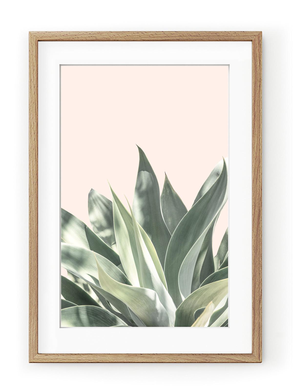 Tablou Light Pink Aloe Oak