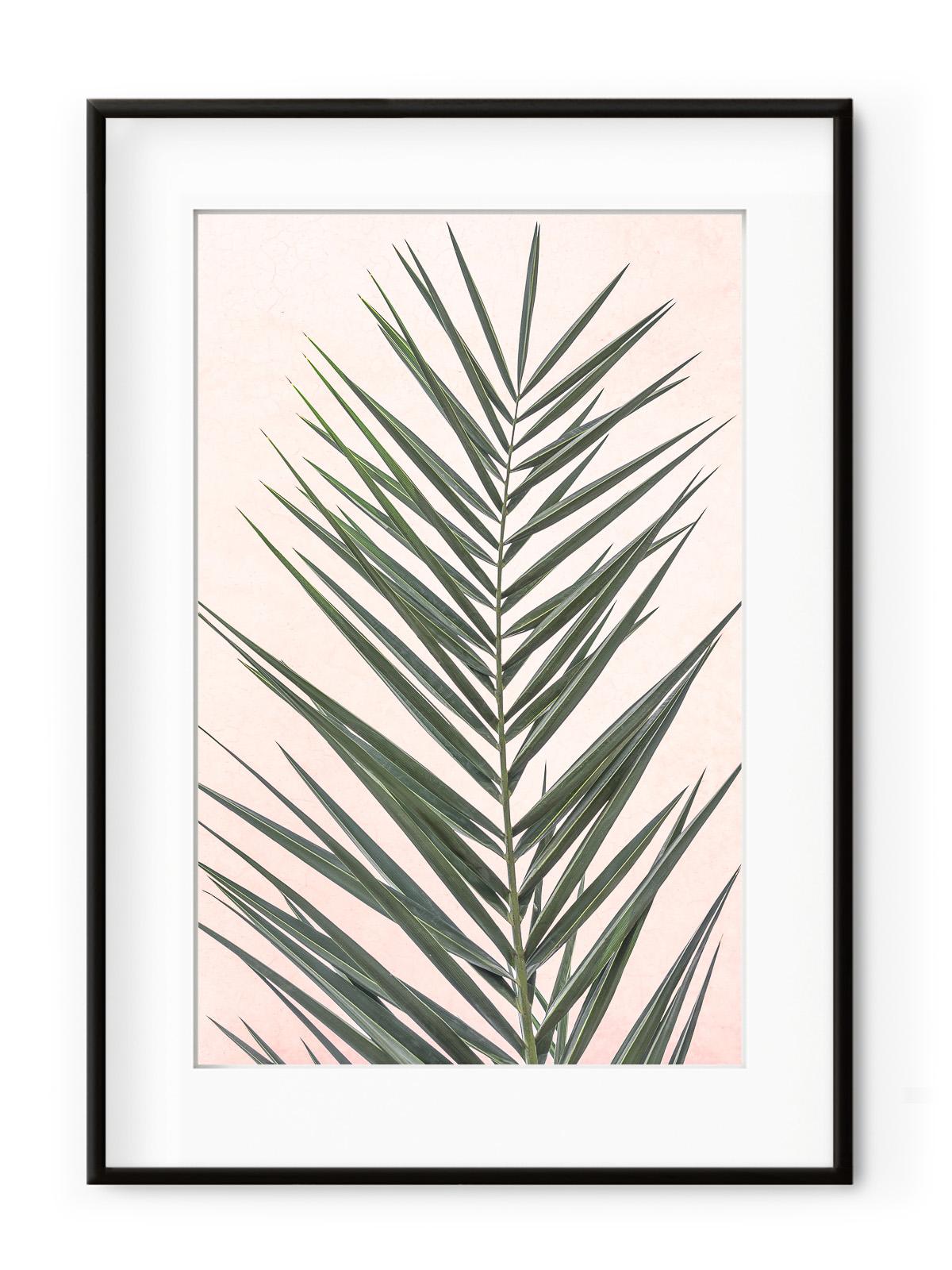 Tablou Light Pink Palm Leaf Aluminium Noir