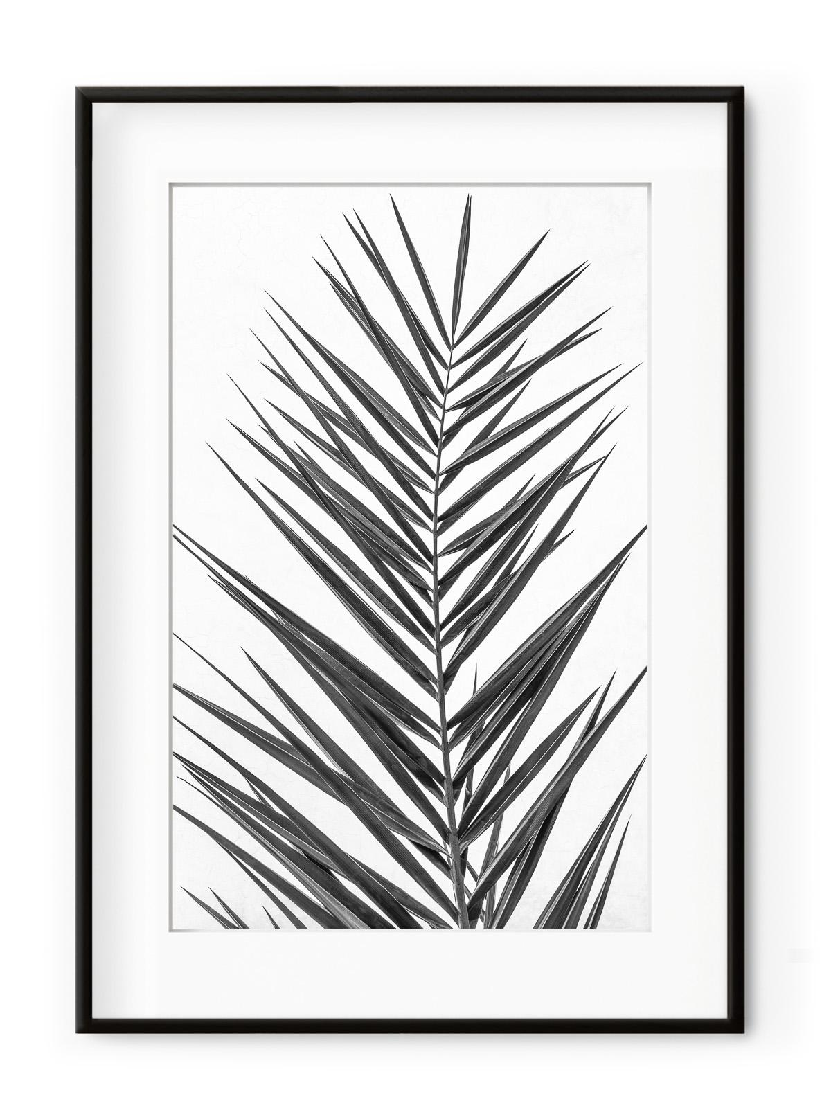Tablou Palm Leaf Black & White Aluminium Noir