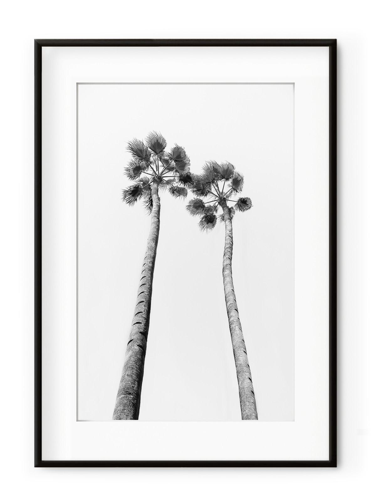Tablou Black & White Palm Trees Aluminium Noir II