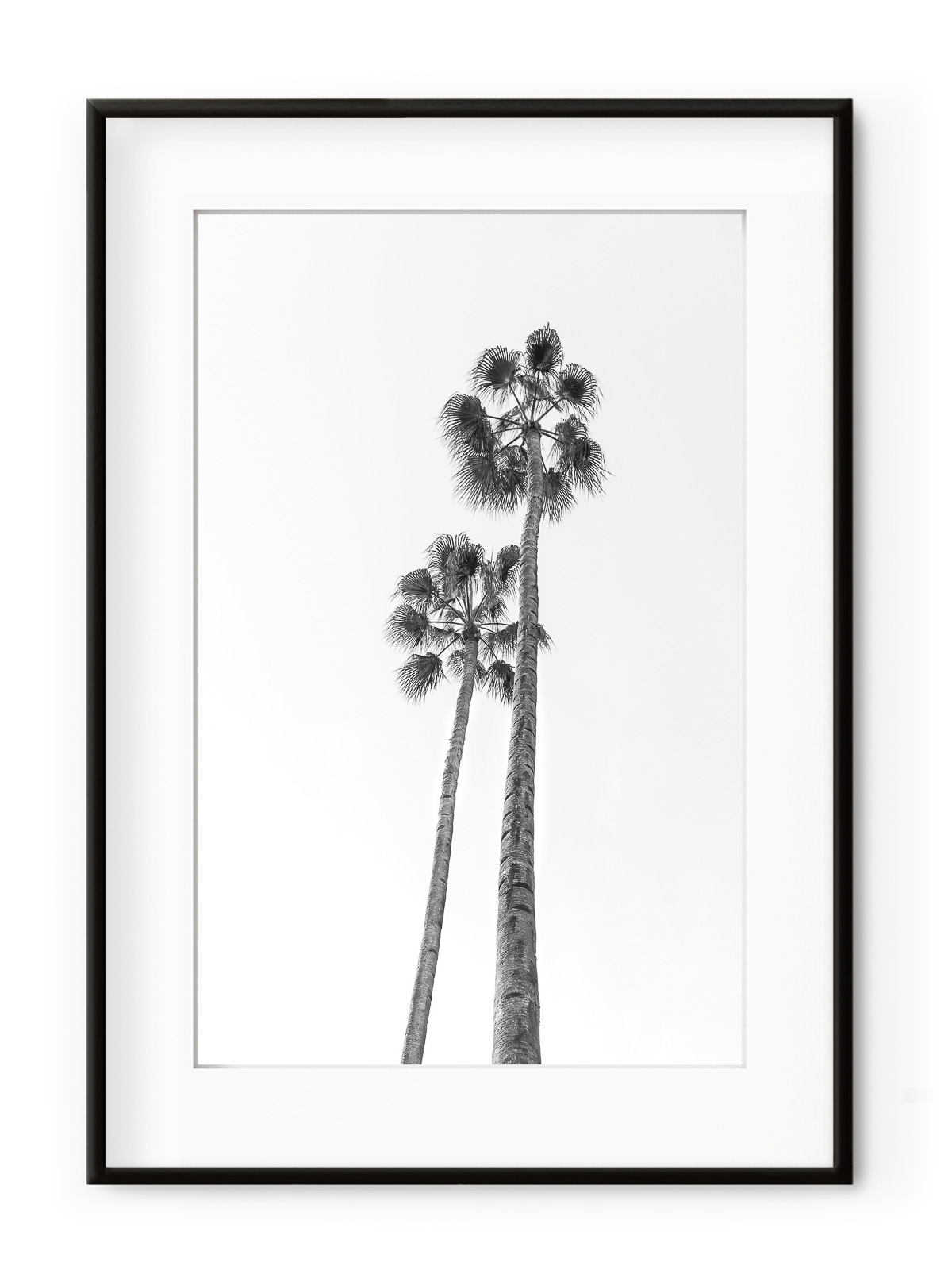 Tablou Black & White Palm Trees Aluminium Noir