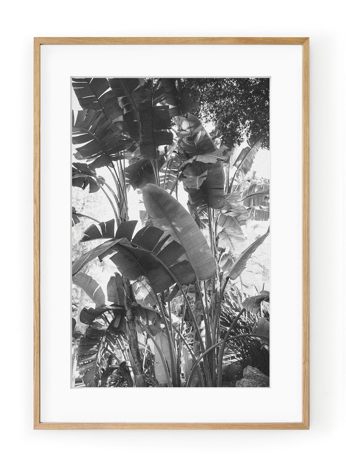 Tablou Tropical Forest II Oak