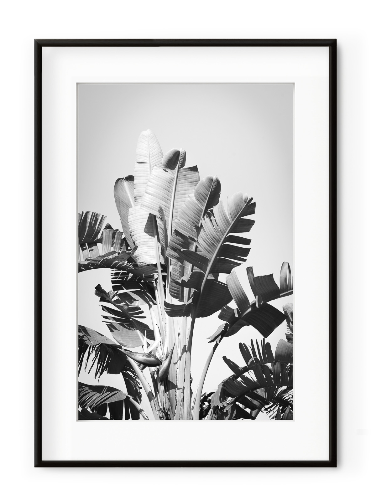 Tablou Tropical Forest Aluminium Noir