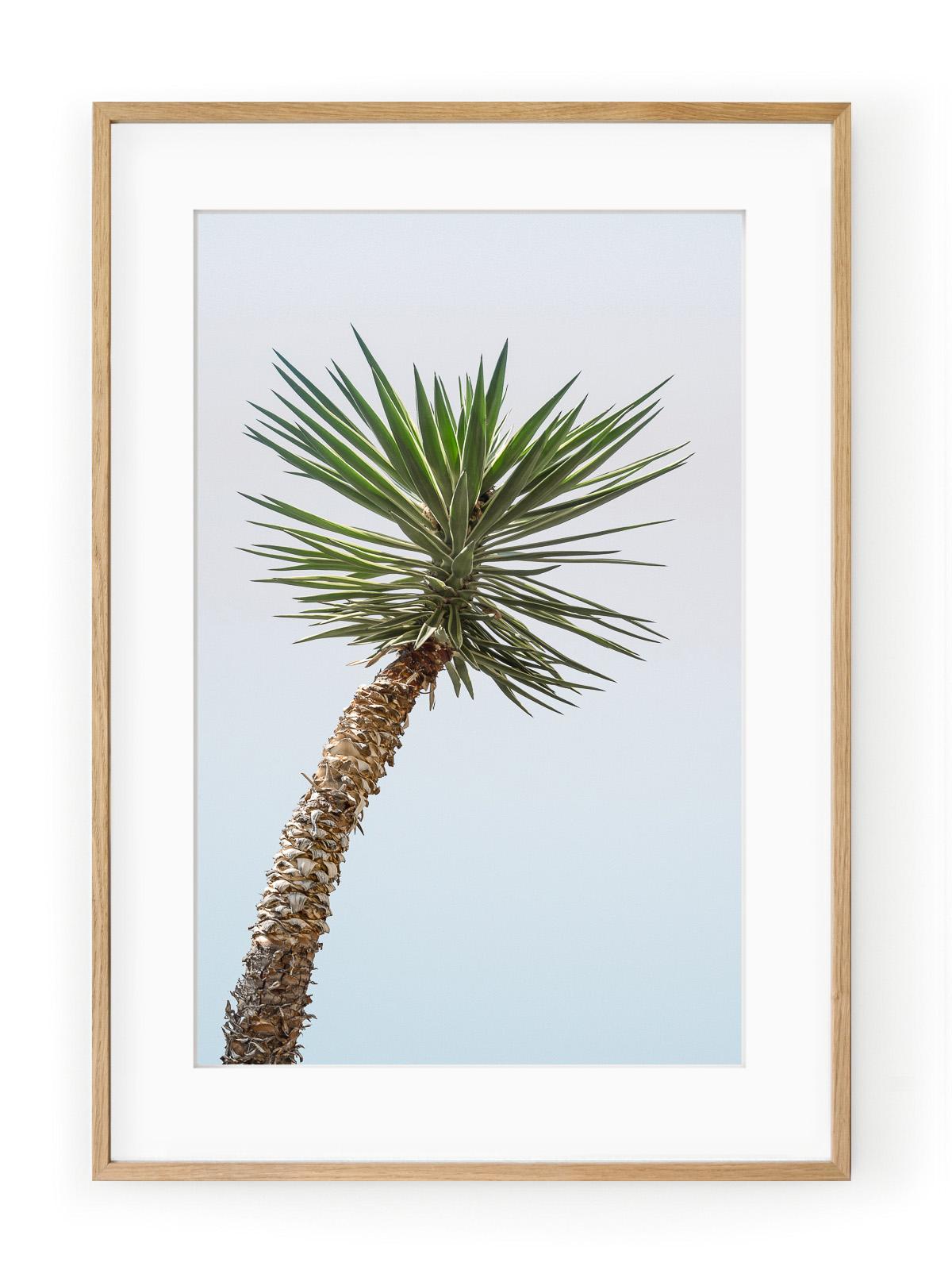 Tablou Minimal Yucca Oak