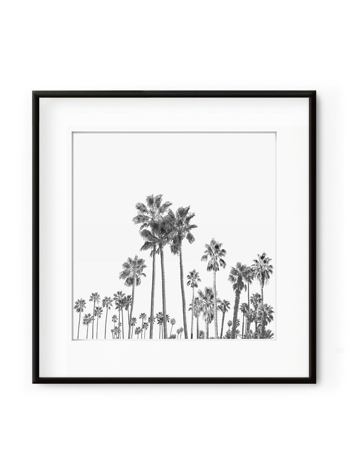 Tablou Black Palm Trees III Aluminium Noir