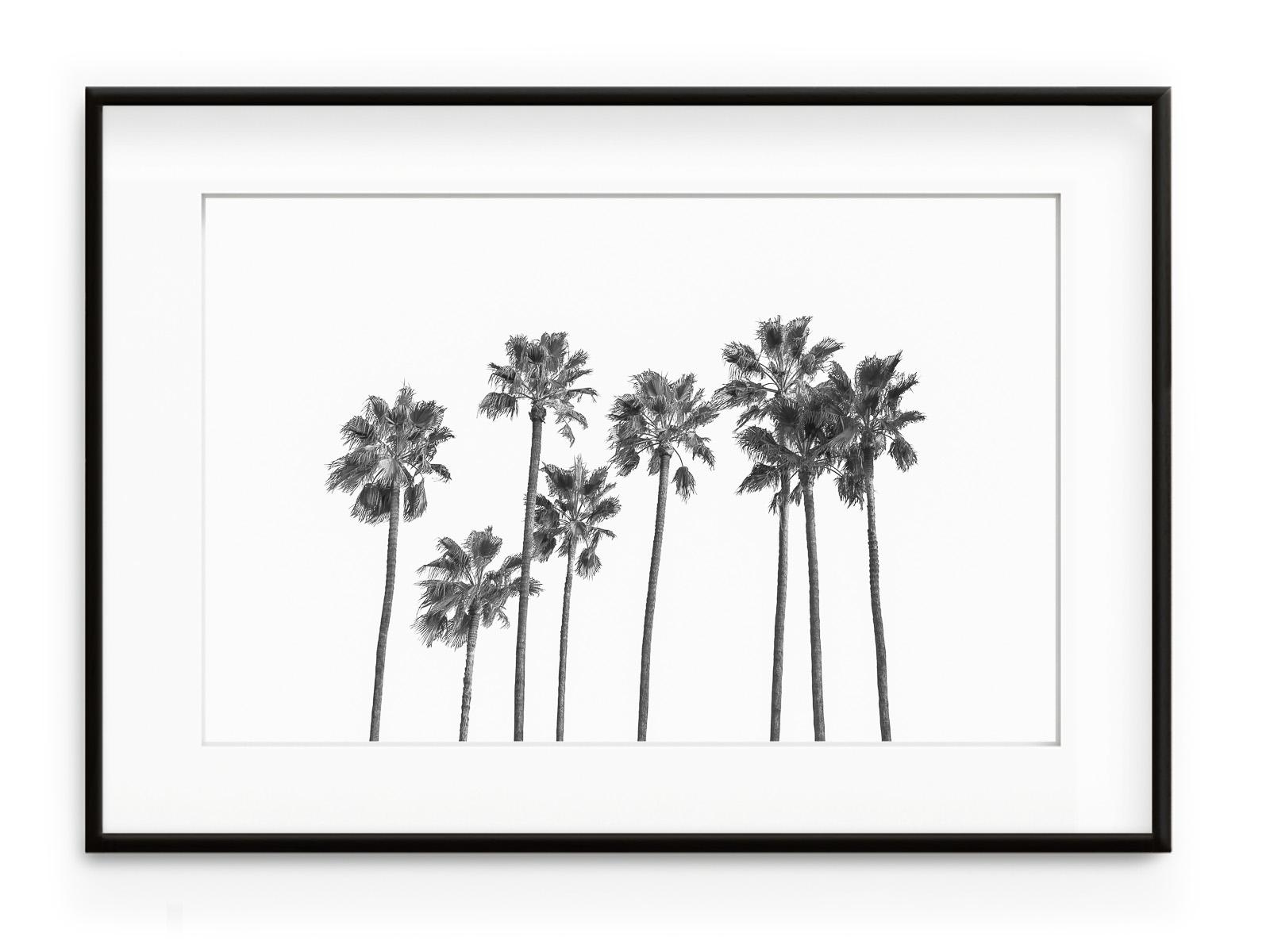 Tablou Black Palm Trees II Aluminium Noir
