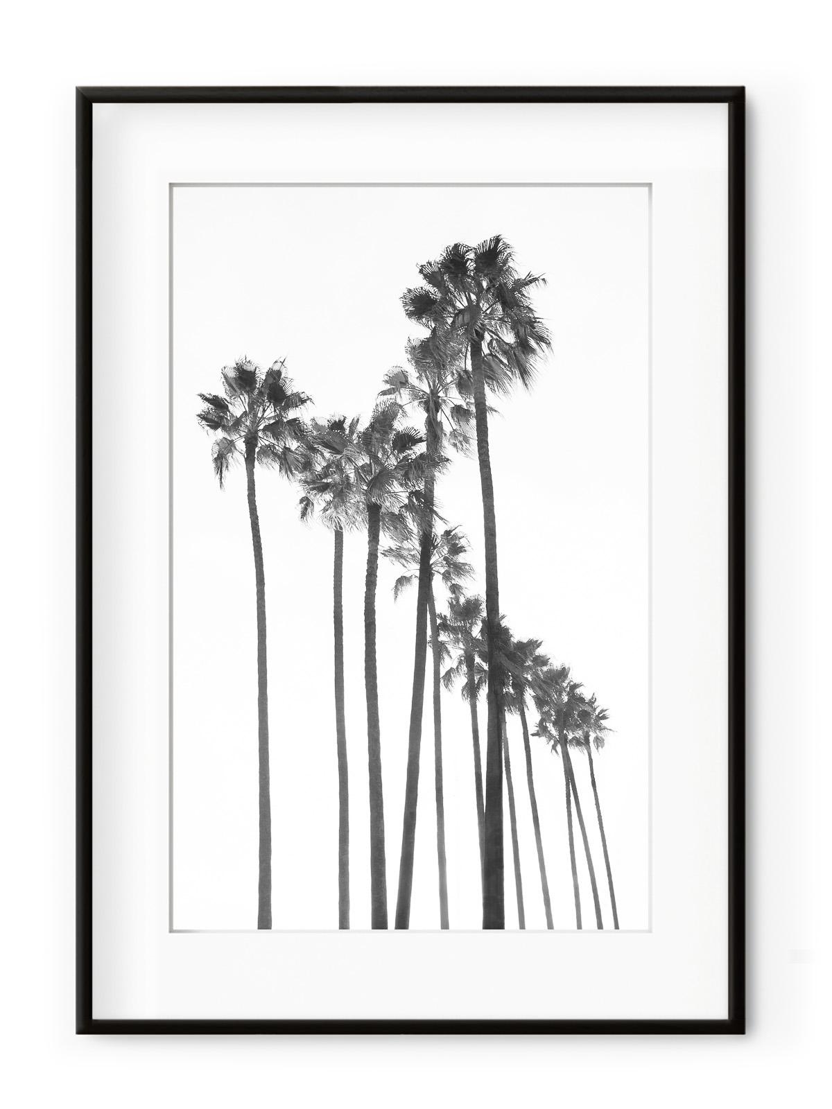 Tablou Black Palm Trees Aluminium Noir