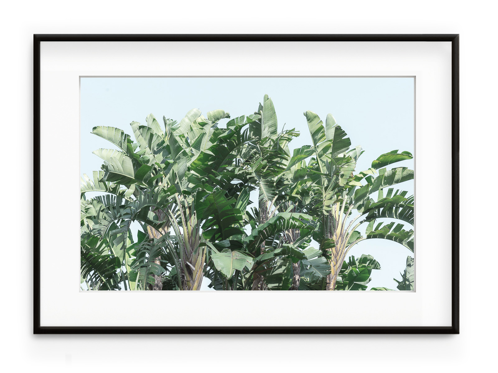 Tablou Banana Trees Forest Aluminium Noir