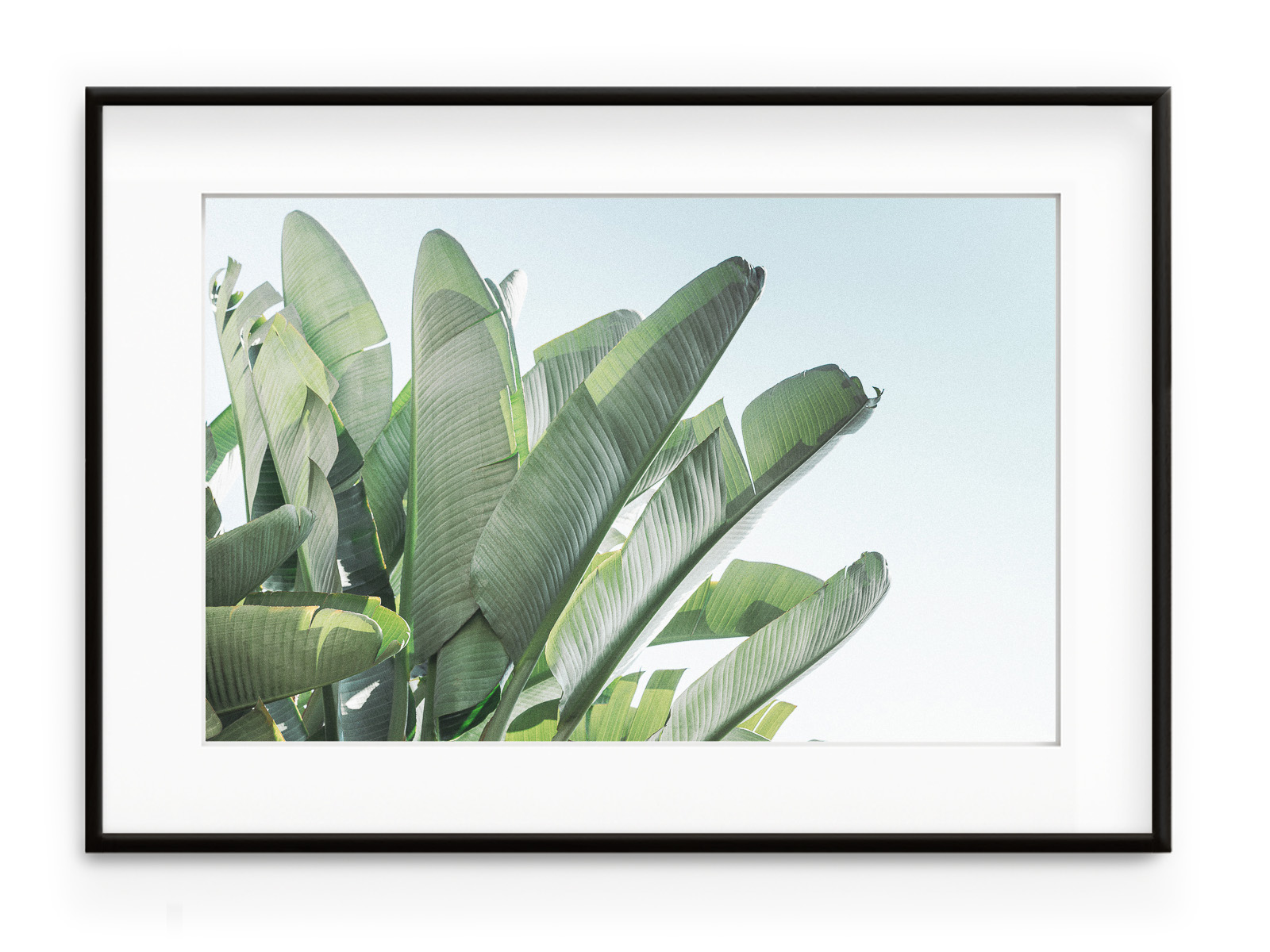 Tablou Banana Leaves II Aluminium Noir imagine