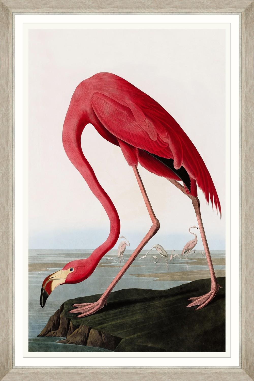 Tablou Framed Art American Flamingo By Audubon imagine