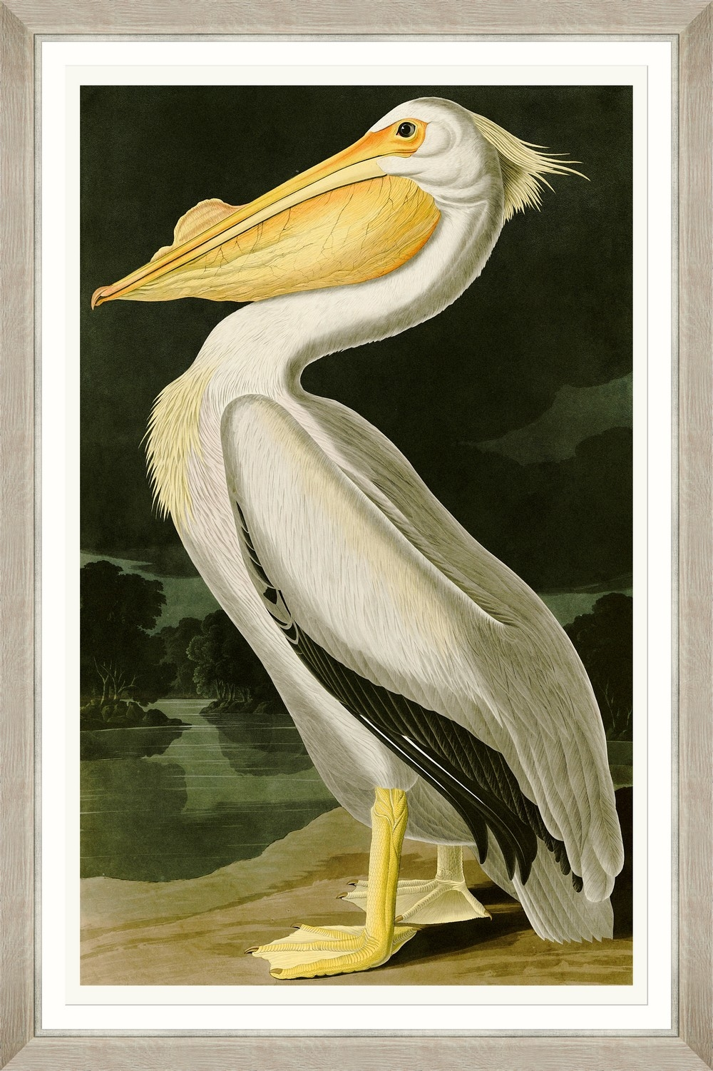 Tablou Framed Art American White Pelican By Audubon