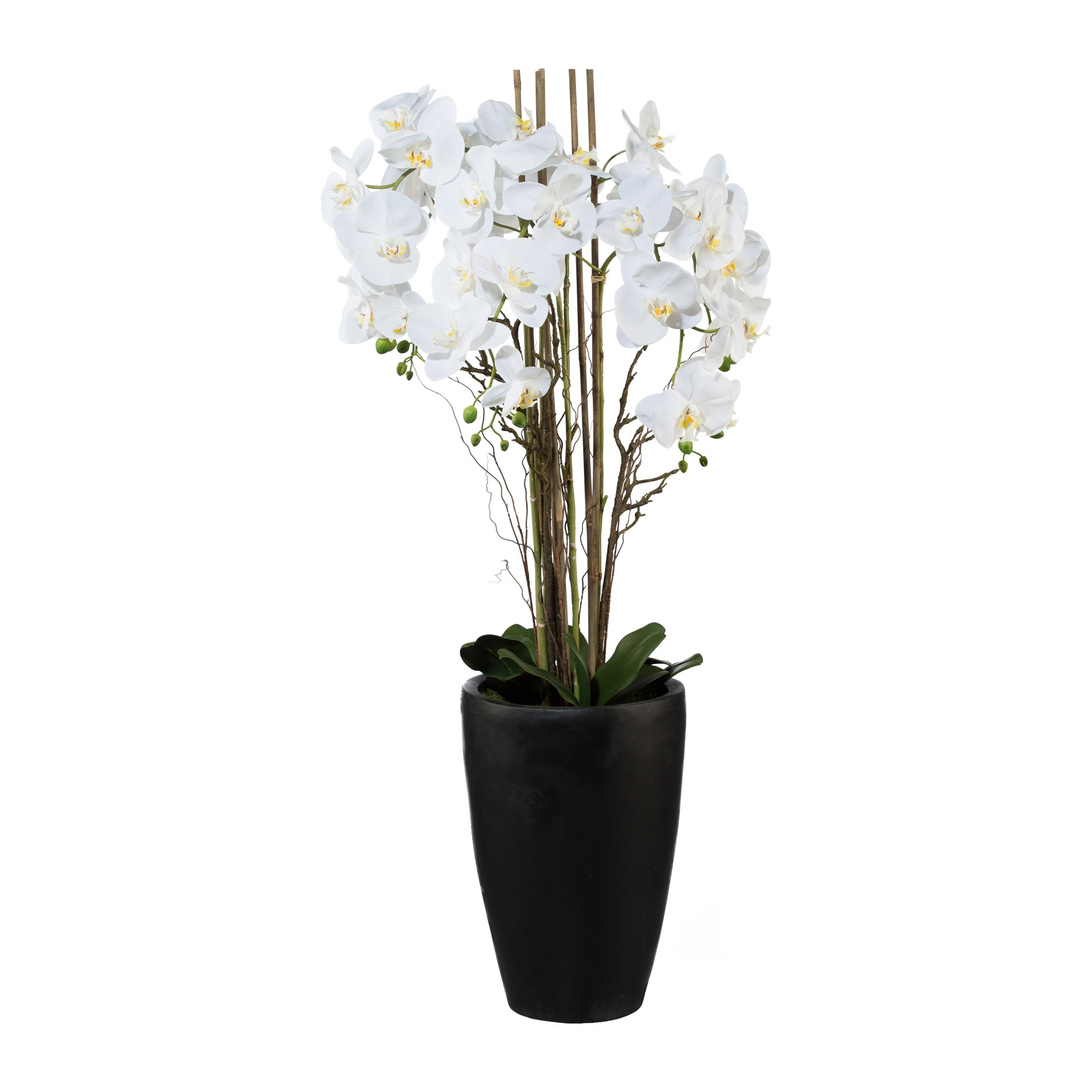 Poza Aranjament Orhidee Phalenopsis Alb in ghiveci, H120 cm