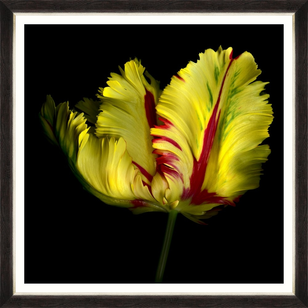 Tablou Framed Art Beautiful Tulip I