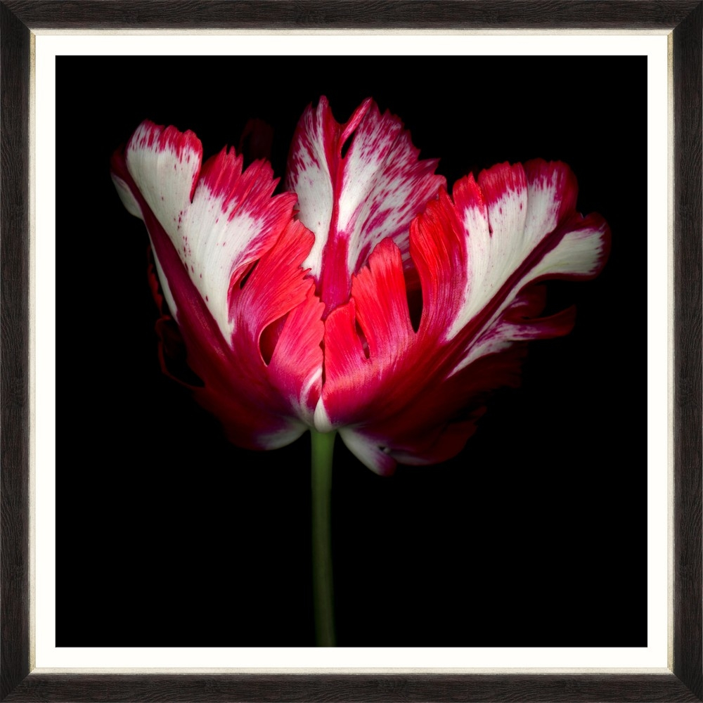 Tablou Framed Art Beautiful Tulip II
