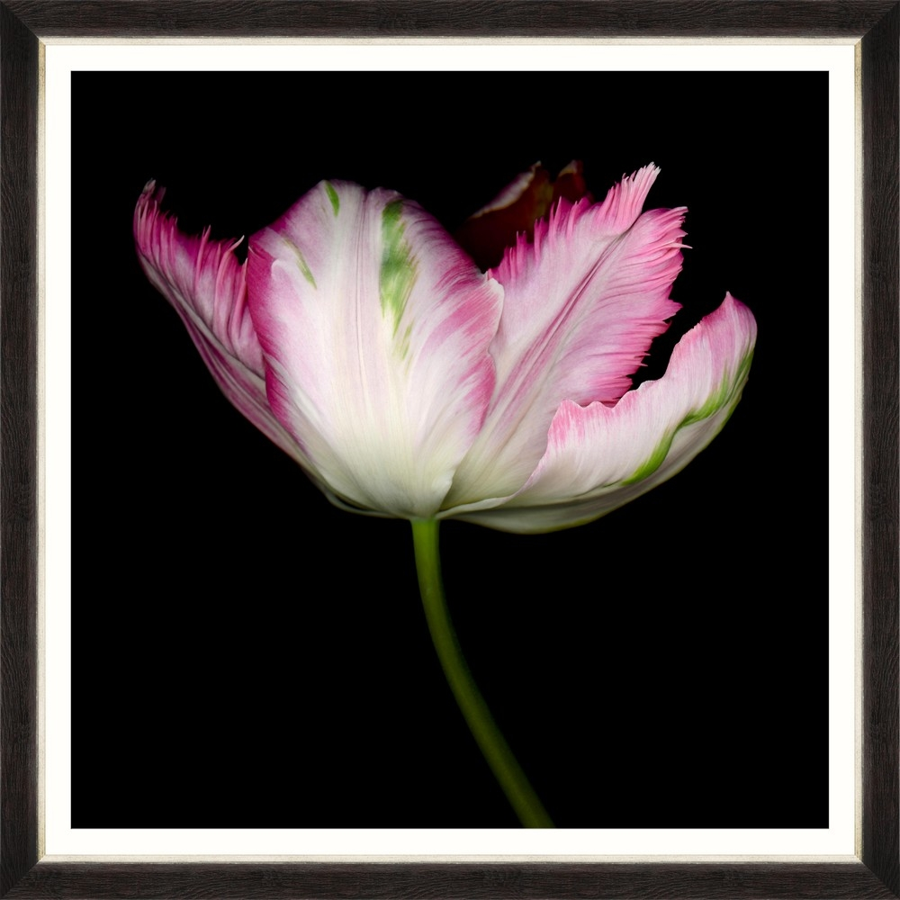 Tablou Framed Art Beautiful Tulip III
