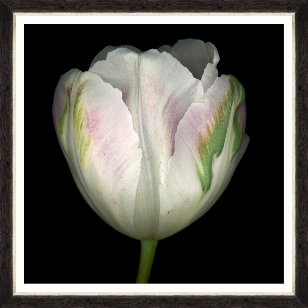 Tablou Framed Art Beautiful Tulip IV