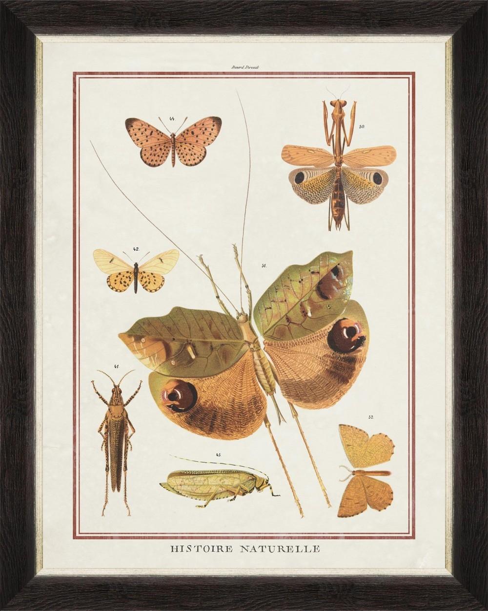 Tablou Framed Art Biodiversity Plate I
