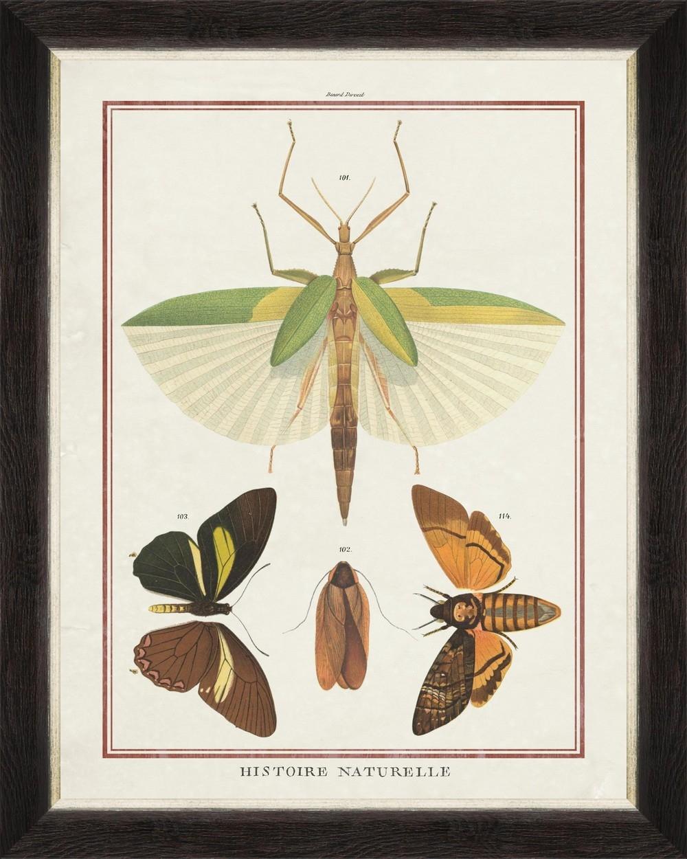 Tablou Framed Art Biodiversity Plate II