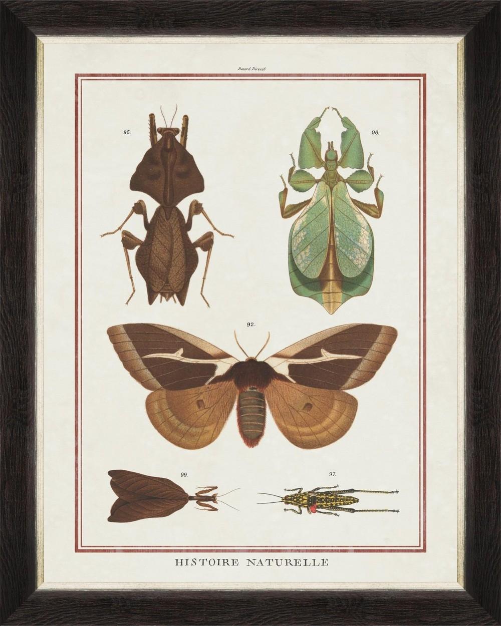 Tablou Framed Art Biodiversity Plate IV