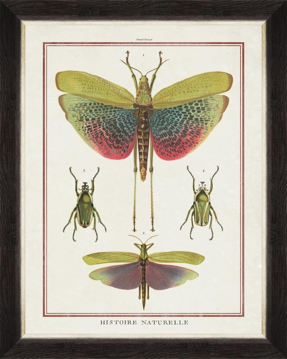 Tablou Framed Art Biodiversity Plate V
