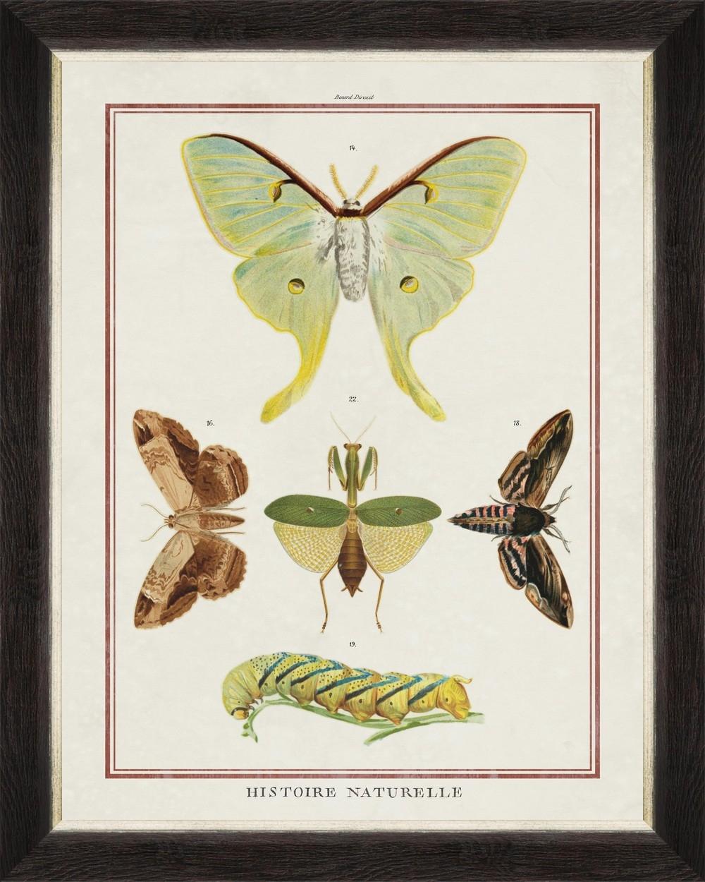Tablou Framed Art Biodiversity Plate VI