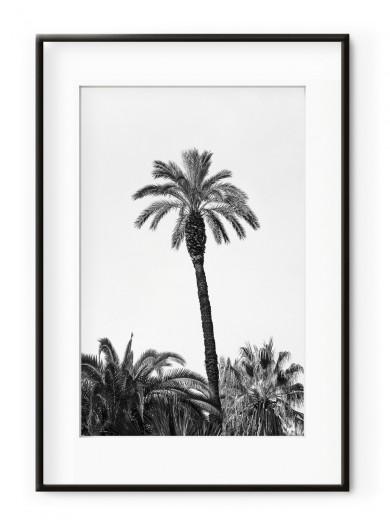 Tablou Grands Palmiers III Aluminium Noir