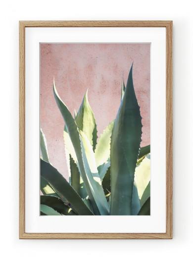 Tablou Plants on Pink Aloe Oak