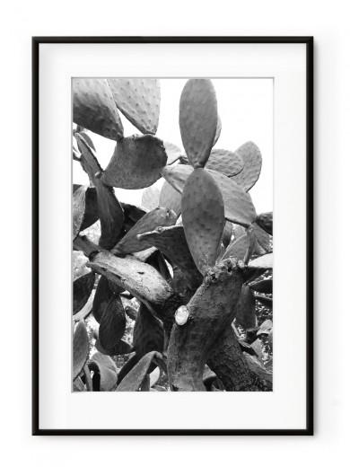 Tablou Black & White Cactus Aluminium Noir