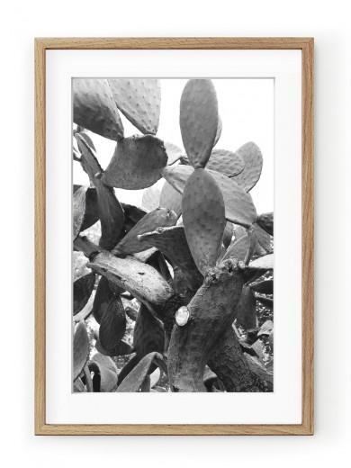 Tablou Black & White Cactus Oak