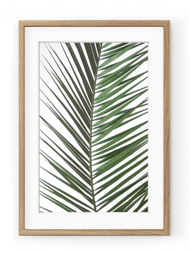 Tablou Palm Leaf Oak