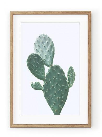 Tablou Plant on Blue Cactus Oak
