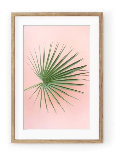 Tablou Palm on Pink Oak