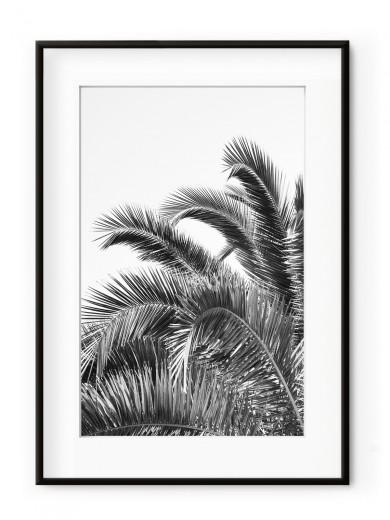 Tablou Palm Leaves Black & White Aluminium Noir