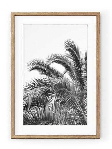 Tablou Palm Leaves Black & White Oak