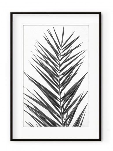 Tablou Palm Leaf Black & White Aluminium Noir
