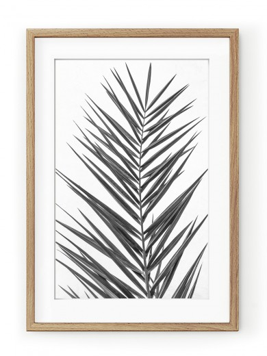 Tablou Palm Leaf Black & White Oak