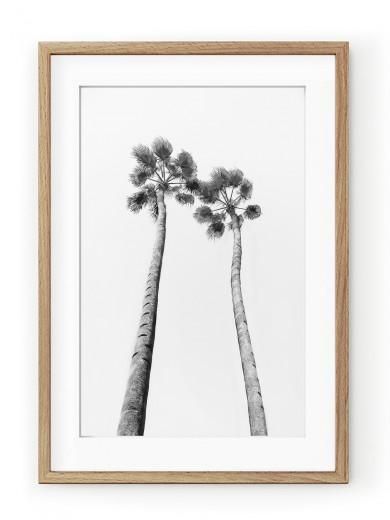 Tablou Black & White Palm Trees Oak II