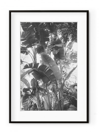 Tablou Tropical Forest II Aluminium Noir