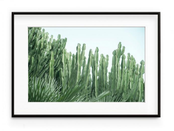 Tablou Cactus Forest Aluminium Noir