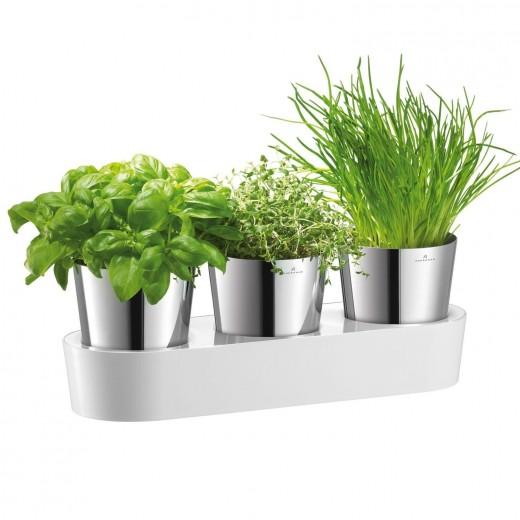 Set 3 Ghivece pentru plante aromate Gourmet, WMF