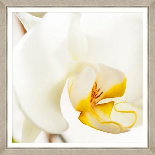 Tablou Framed Art Orchid Bloom I